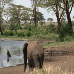 102. water in Serengeti