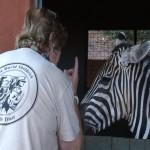 040. orphan zebra NGULIA bites...