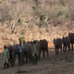 047. elephant parade