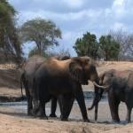 076. mud pool in Ithumba