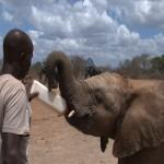 101. elephant orphans only