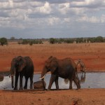 002. water hole during off-peak hours