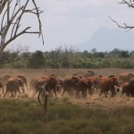 013. elephants go into overdrive