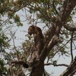 040. up a tree