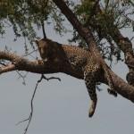 041. kat uit de boom kijken